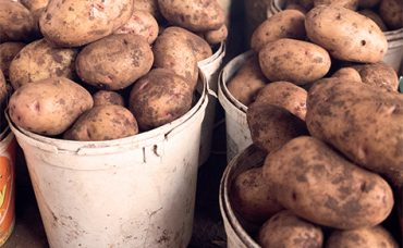 Relevance of the Potato Sector